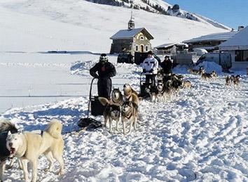 Escapade chiens de traineaux
