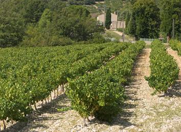 Séminaire vignobles de la Drôme